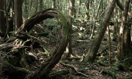 Mistérios do Mundo – Aokigahara, a Floresta do Suicídio